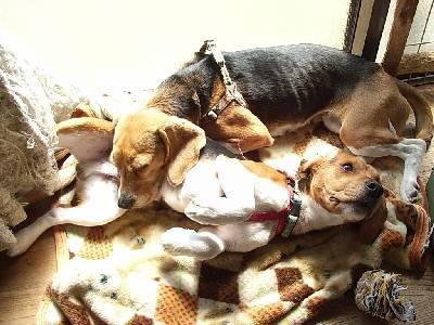 ボンド:「ママの枕になっちゃった。」