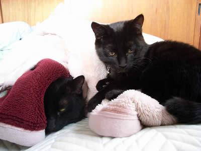 ガリ&さしみ:「寝ぼけ黒猫大・小」