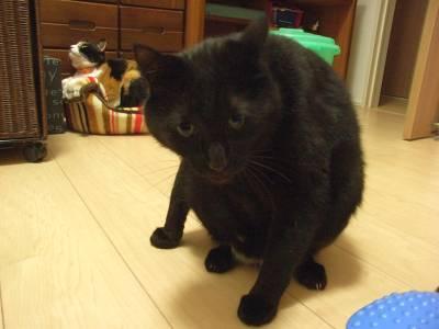 猫背のガリ