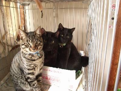 閉じ込められた猫たち