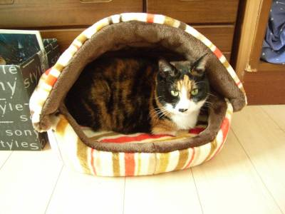 猫用ベッドに入ったけむちゃん