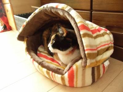 猫用ベッドに入ったけむちゃんを横から見た様子