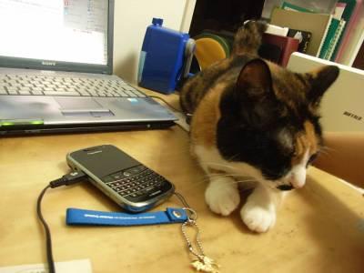 机の上の猫けむし2