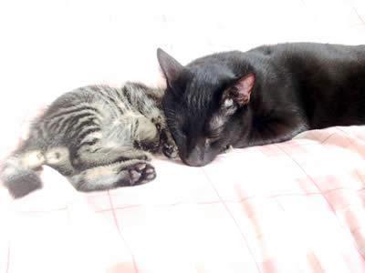 ぱうひろを枕にするピッチョルニ