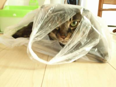 ぱうひろ:「袋は楽しいぜ!」