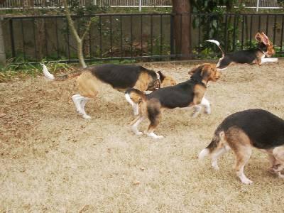 ベルナと走る仔犬たち1