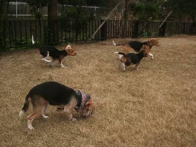ベルナと走る仔犬たち2