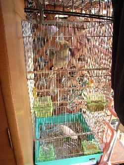 新しい鳥籠